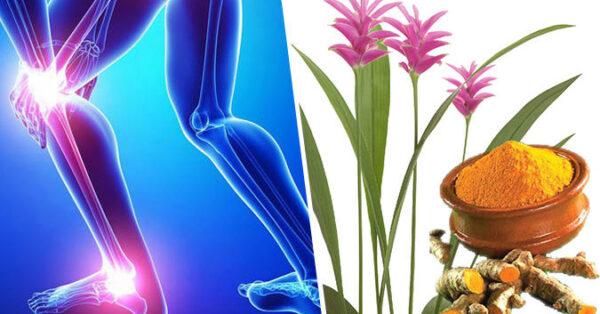10 Công Dụng Hữu Hiệu Của Cây Nghệ Với Sức Khỏe Con Người